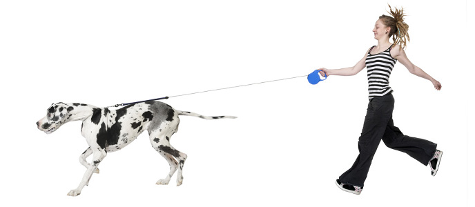 Erziehung und Training Hundeerziehung