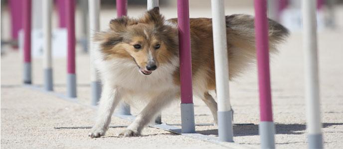 Hundesport / Agility