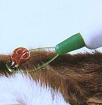 Zeckenschlinge, 11 cm, Kunststoff