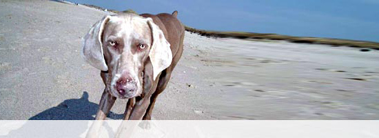 Hundeboxen